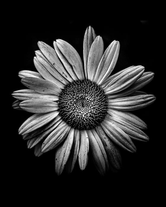 http://fineartamerica.com/featured/backyard-flowers-in-black-and-white-13-brian-carson.html