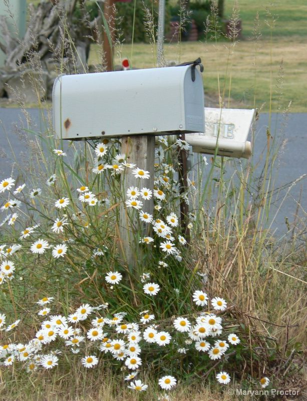 mailboxes in the field