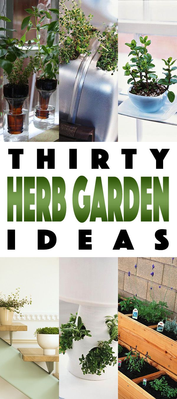 Need and idea and a DIY for an Herb Garden...well you are in the right place!  30 fun and fabulous Herb Gardens are waiting for you to plant!  ENJOY!