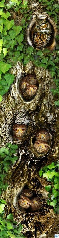 Owl apartment building!