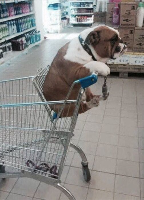 I see people bringing their dogs in stores. I might bring my bulldog next time.