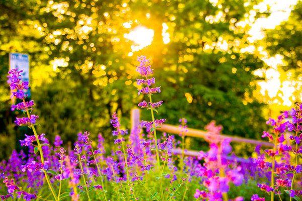 Super Sun shine