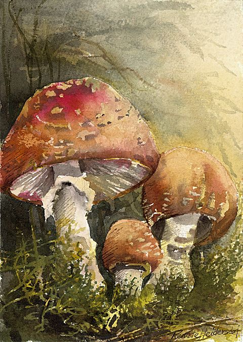 Trois champignons, Watercolor by Renate Heidersdorf