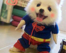 Rozkošný oblek pre psa alebo mačku s motívom Supermana