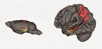 Where Alzheimer's starts, why it starts there, and how it spreads throughout the brain.