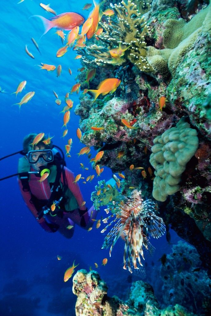 Diving in Costa Rica - A unique diving Experience