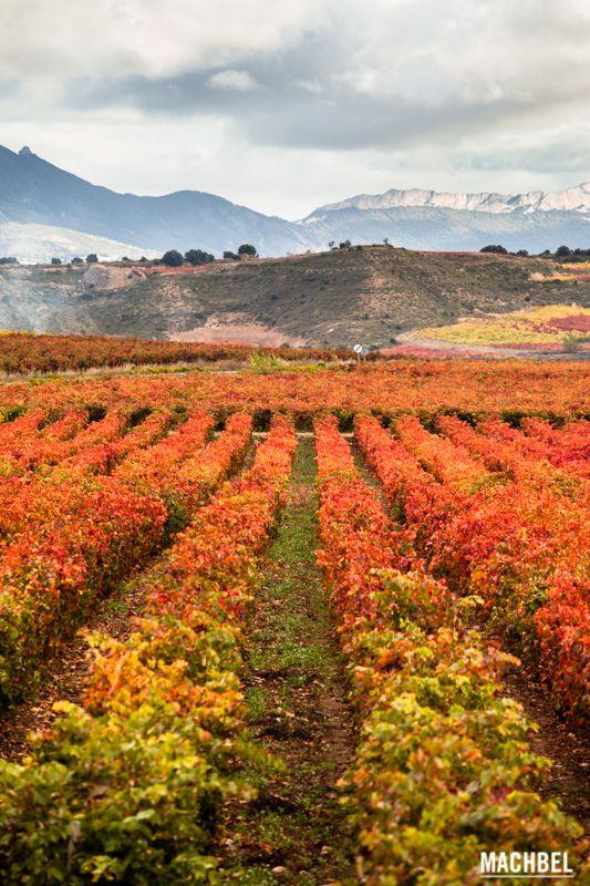 Paisaje de viñedos en La Rioja Viñedos en otoño La Rioja España by machbel