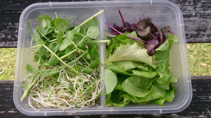 Byron Bay Microgreens Salad pack home delivered to you within the Byron Shire!