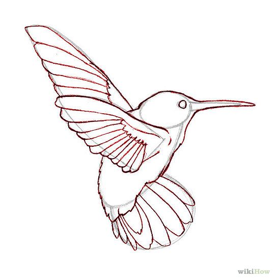 Simple Bird Line Art : Draw hummingbirds pictures and how to