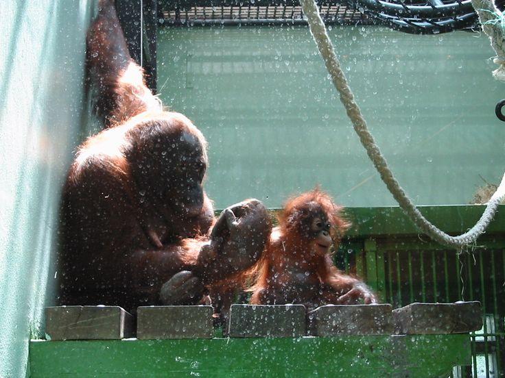 Orang Oetan (2002) - Mota & Surya