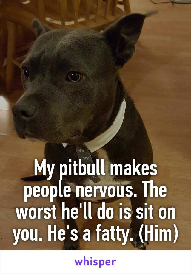 My pitbull makes people nervous. The worst he'll do is sit on you. He's a fatty. (Him)