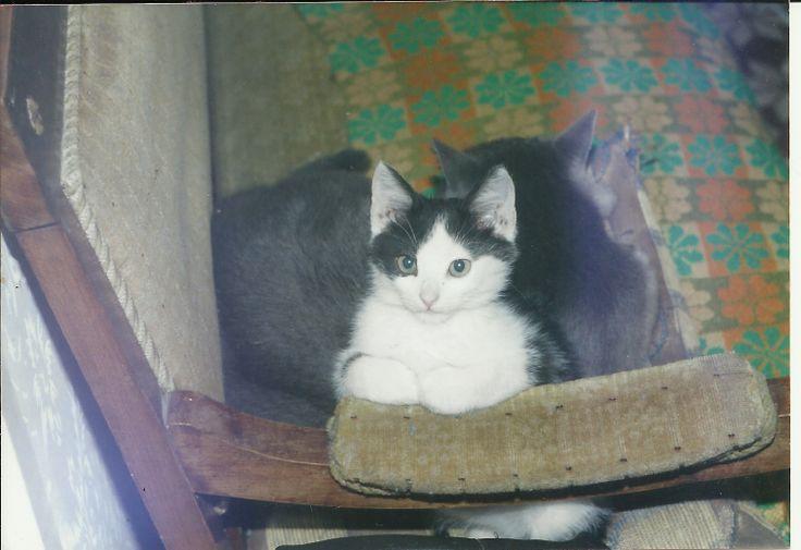 My little Sylvester