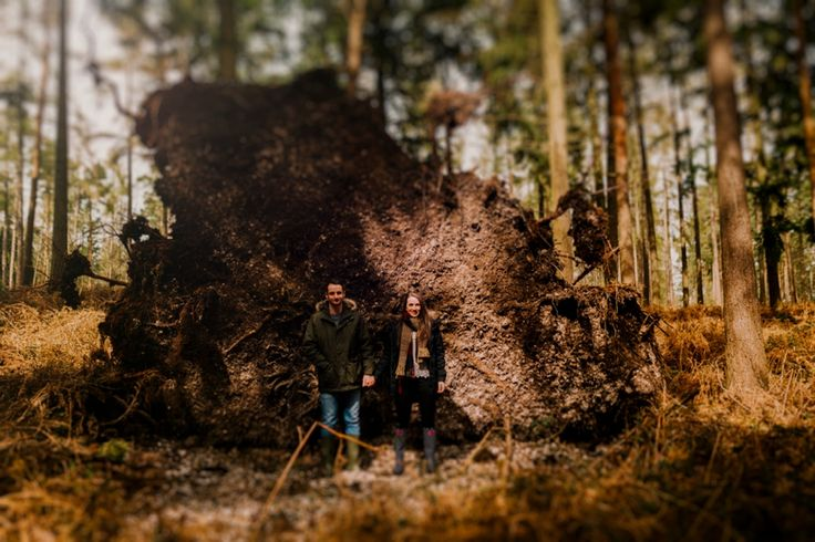 Taking advantage of what nature gives us - this time, a massive uprooted tree! Photo by Benjamin Stuart Photography #weddingphotography #couple #forest #engagementshoot #holdinghands