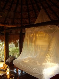 Bed Canopy in the tropics