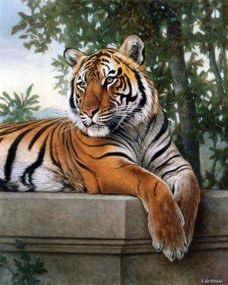 Tigres de bengala                                                                                                                                                                                 Más