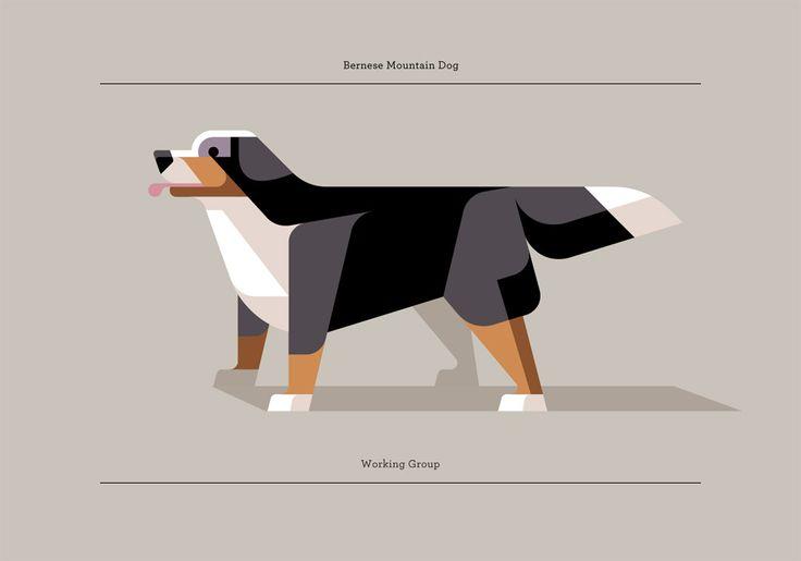 Bernese Mountain Dog: Bern Mountain Dogs, Bernese Mountain Dogs, Dogs Breeds, Art, Illustration, Josh Brill, Graphics, Dogs Prints, Design