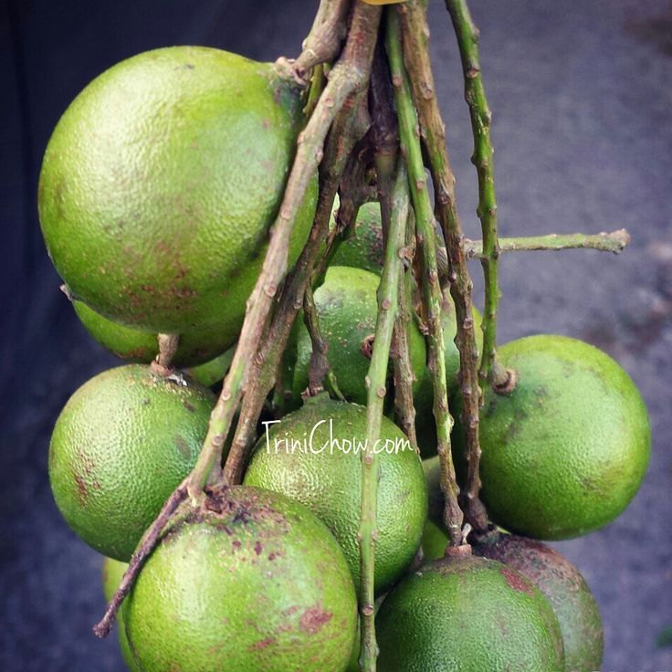 Chennette Fruits And Vegetables Of Trinidad Amp Tobago