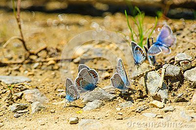 Butterflies on the ground with stones