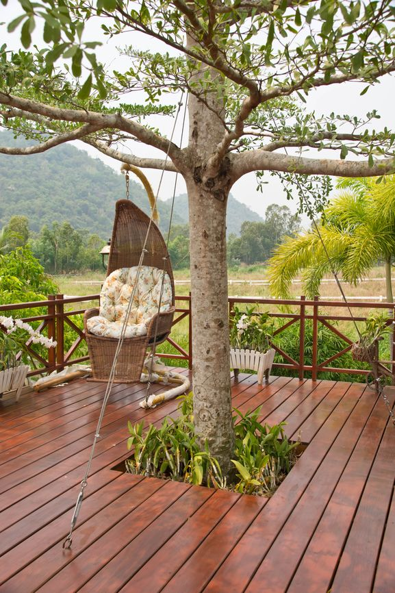 Wood deck with tree growing through the middle