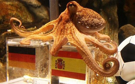 Ashes of Paul the octopus on show in Germany - Telegraph