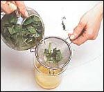 its volatile oils soothe the mucous membranes, good for throat and tonsil pain. heals skin abrasions. strong brew will darken hair, rub on the teeth to cleanse/strengthen gums.  Benefits:remedy in delirium of fevers and nervous excitement accompanying brain/nerve ailments; sooths stomach and nervous system; fights liver/kidney troubles;fight colds, sore throat, measles;used for joint pain and palsy; medication for sore throat, mouth sores and mouth ulcers; helps check excessive perspiration.
