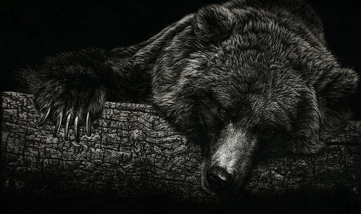 Hudozhnitsa-Cristina-Penescu.-Gratografiya-Grizzly-Bear.-10h6-dyuymov