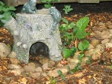Toads welcome!  How to build a toad house and attract toads.