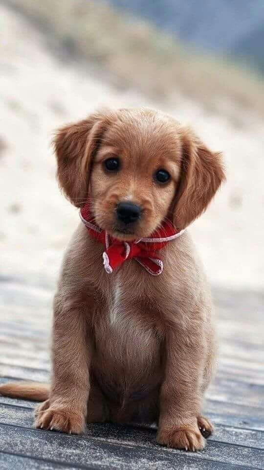 Tgi Greek Custom Apparel Sorority Shirts Fraternity Shirts Cute Puppies Baby Dogs Puppies