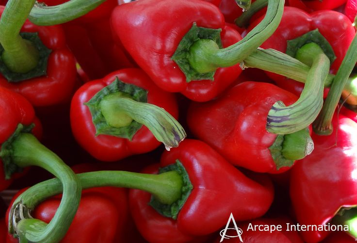 Peppers originated in South and Central America and are now grown worldwide.