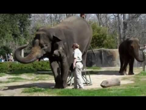 An Apology To Elephants (FULL) Let us treat these magnificent animals with dignity and respect. Let them live in their own habitat. Save them from us!