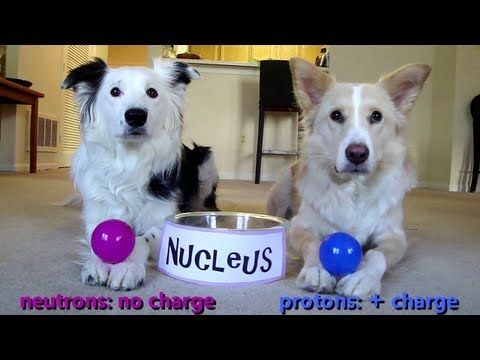 Dogs Teaching Chemistry. These videos are awesome, and adorable at the same time!