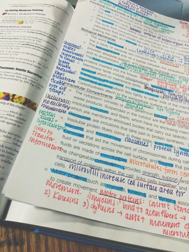 jessisfackingstudying: Making study guides for human physiology + adding a shit ton of annotations from textbook. Happy studying!
