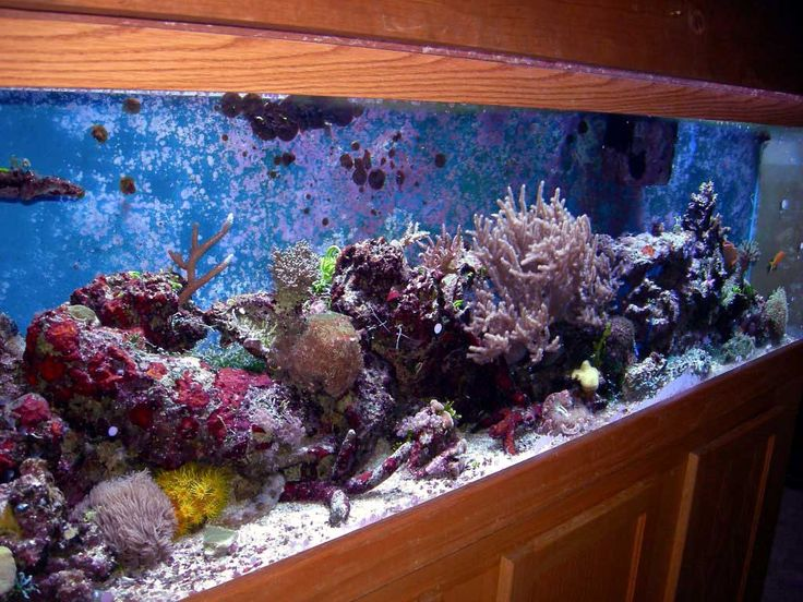 15 best images about aquarium ideas and design on Beautiful aquariums for home