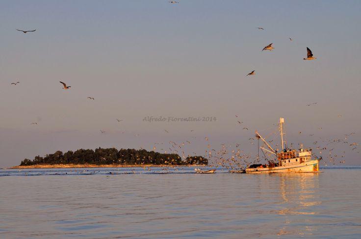 peschereccio ritorna in porto dopo una notte si pesca.-Rovigno