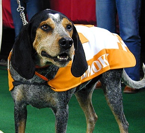 "U Tennessee Volunteers' Hound Mascot ""Smokey"" - there ain't nothin' like a hound dog. The Obermeier family loves 'em!"