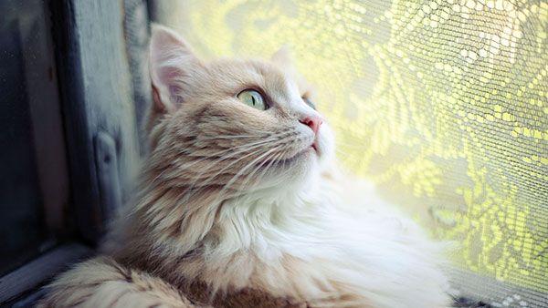 تحميل 100 صورة خلفيات قطط رائعة وعالية الدقة مداد الجليد Beautiful Cat Images Cute Cat Wallpaper Funny Cat Photos