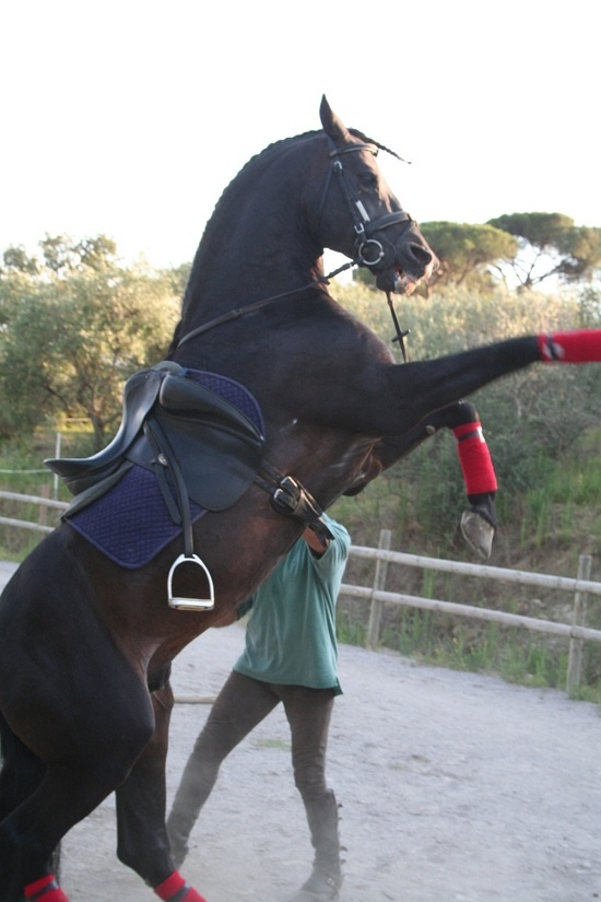 Riding school and horse trekking