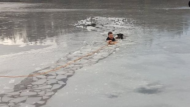 On Friday Feb. 10, 2017 a Vancouver Police officer jumped into Lost Lagoon in Stanley Park to rescue a dog that had fallen through the ice after chasing a ball onto the frozen water.