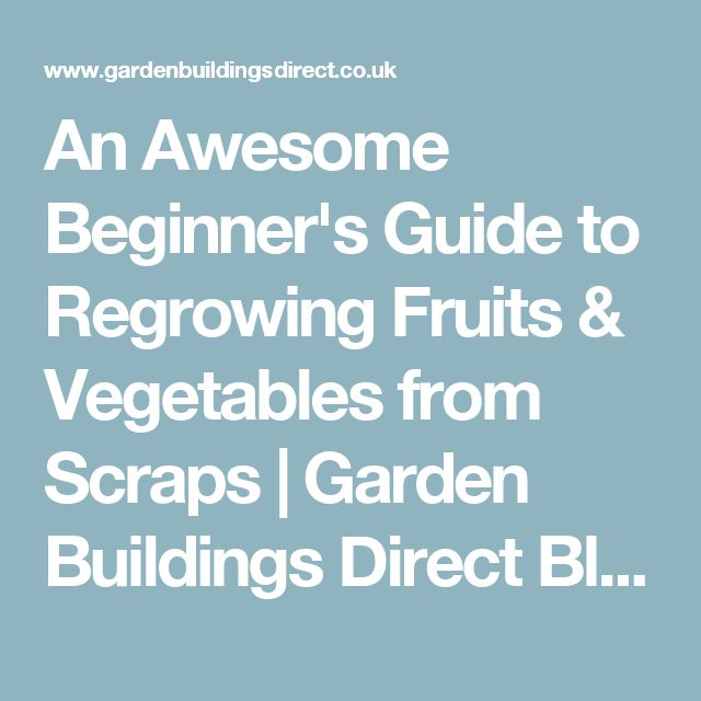 An Awesome Beginner's Guide to Regrowing Fruits & Vegetables from Scraps | Garden Buildings Direct Blog