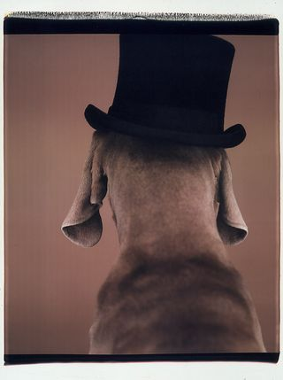 William Wegman, doesn't this remind you a character from Dickens?