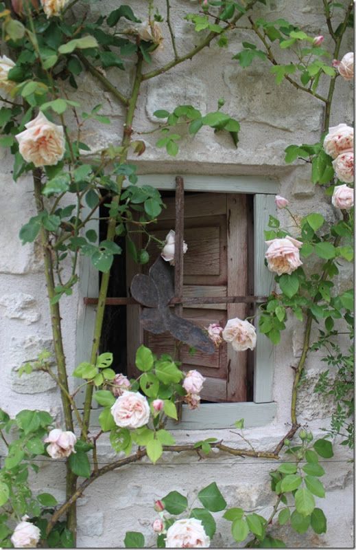 French country ~ climbing roses