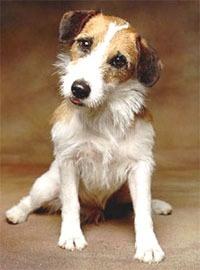 My fave TV dog ... Eddie from Frasier!