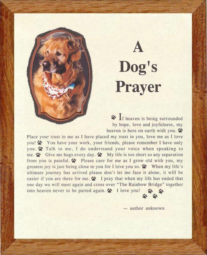 A Dog S Prayer For When A Dog Dies