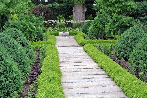 The boxwood 'tide hill' which is the light green you see here is a dwarf Korean boxwood cultivar that usually only grows to one-foot tall. It's a beautiful shade of green that pops in this garden.