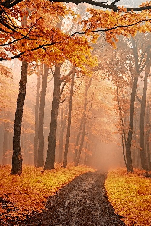 Misty autumn woods in White Carpathians, Slovakia / Czech Republic  (by Janek Sedlar on 500px)  Mist and fog are go-betweens, like the gloaming, and fae magic happens there....