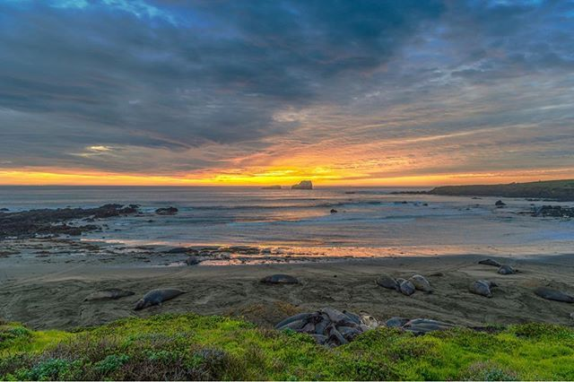 An evening with the Elephant seals. . . . . . . #sunset #sunset #goldenhour #pacificbeach #pacificcoasthighway #pacificocean #highway1 #landscape #landscapephotography #naturephotography #nature #seal #sealbeach #elephantseals #california #californialove #wildlife #wildlifephotography #ig_cameras_united #igerscalifornia #bigsur #overcast #clouds #wednesday #discoverearth #theworldguru #seabeach #sea #calocals - posted by ThroughLens Photography https://www.instagram.com/throughlens_studios…