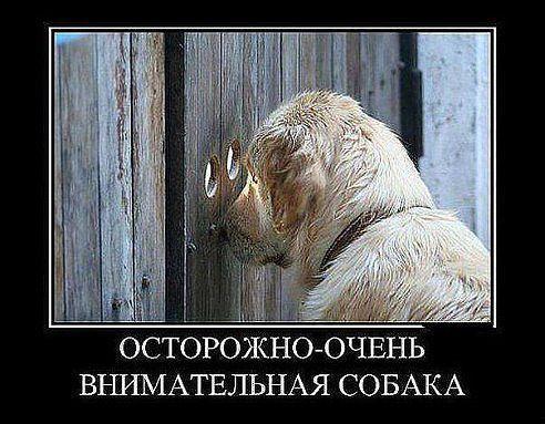 смешные фото | 108 фотографий