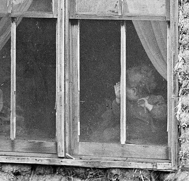 dailey windows