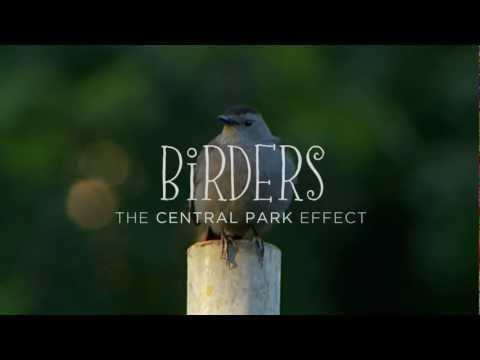 """Trailer de la película """"Birders-The Central Park Effect"""""""
