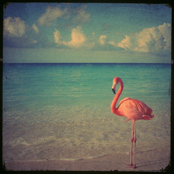 Flamingo art photo - 8x8 a stunning pink flamingo against a beach with beautiful turquoise ocean. Buy one get one free sale. $30.00, via Etsy.